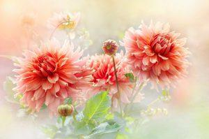 Angels of Joyful Mood
